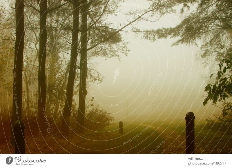 Autumn fog Nature Landscape Fog Rain Forest driving mountain Lanes & trails Bollard Barrier Romance Loneliness Longing September October November November mood