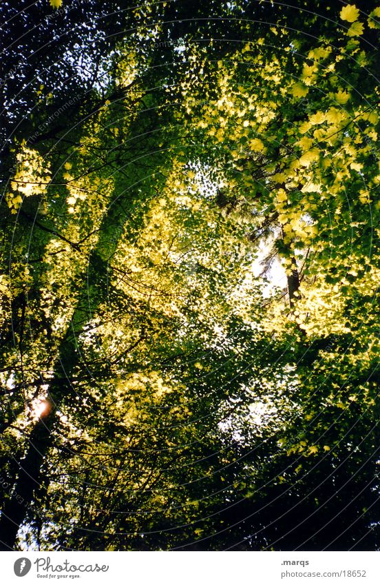 leaf blanket Forest Tree Leaf Lighting Green Growth Branchage Summer Sun Light (Natural Phenomenon) Shadow marqs