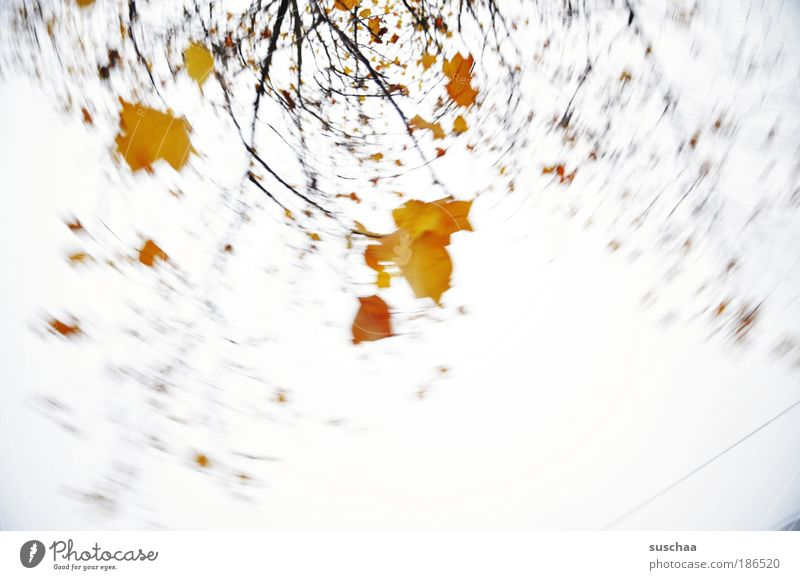 ...like a leaf in the wind .. Environment Nature Sky Autumn Climate Tree Esthetic Contentment Branch Leaf Movement Rotation Patch of colour Colour photo
