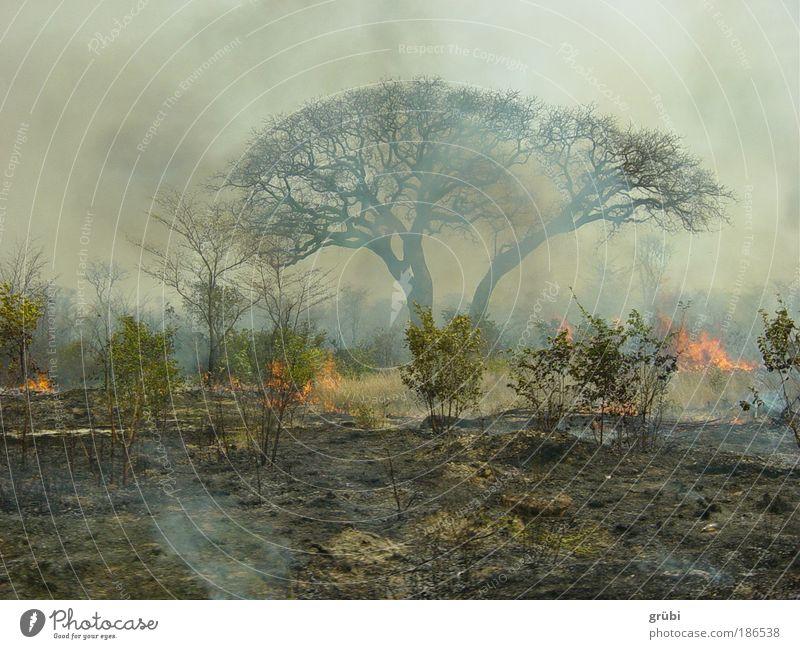 Bush fire in Botswana Safari Landscape Fire Virgin forest scrub Dangerous Colour photo Exterior shot Deserted Day