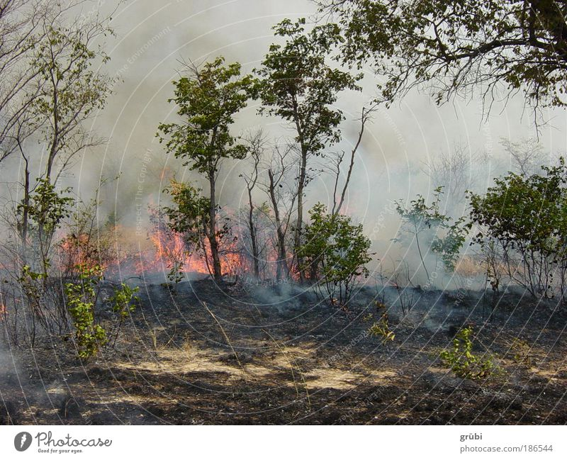 Nature Forest Landscape Fire Dangerous Safari