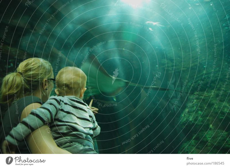 batoidea Human being Child Baby Toddler Boy (child) Parents Adults Mother Water Animal Fish Looking Threat Blue Green Aquarium Ray Tenerife Spain