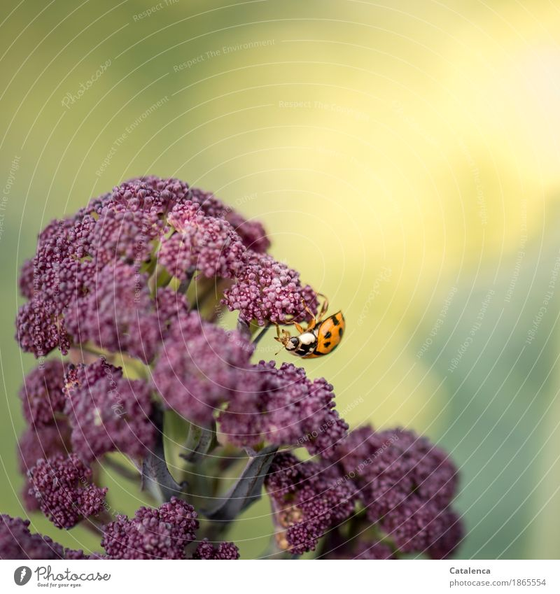 Nature Plant Summer Green Animal Yellow Movement Small Garden Orange Field Power Esthetic Happiness Beautiful weather Violet