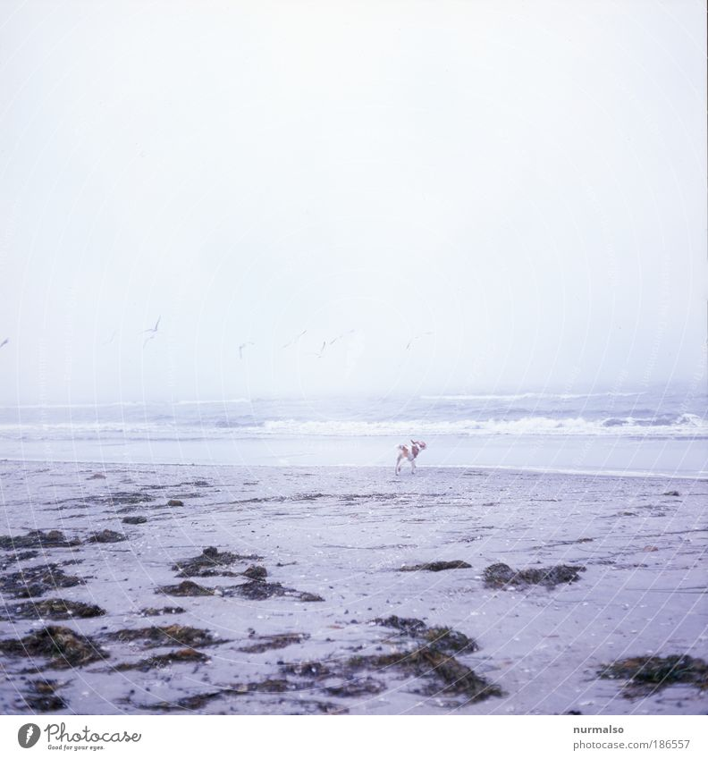 Nature Ocean Winter Calm Animal Dog Landscape Bright Fog Free Leisure and hobbies Baltic Sea Harmonious Baby animal