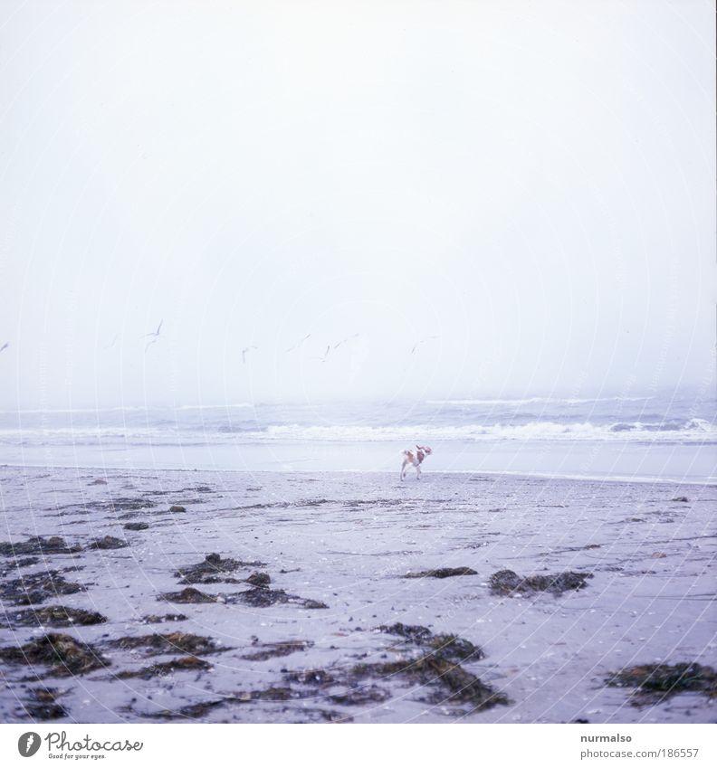 Nature Ocean Winter Calm Animal Dog Landscape Bright Fog Free Leisure and hobbies Baltic Sea Harmonious Baby animal