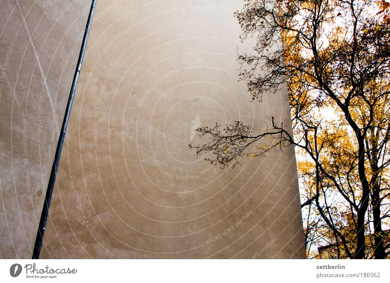 Tree Leaf House (Residential Structure) Autumn Wall (barrier) Building Corner Branch Seasons Edge Twig Corner of the room Backyard Tenant Neighbor Steep