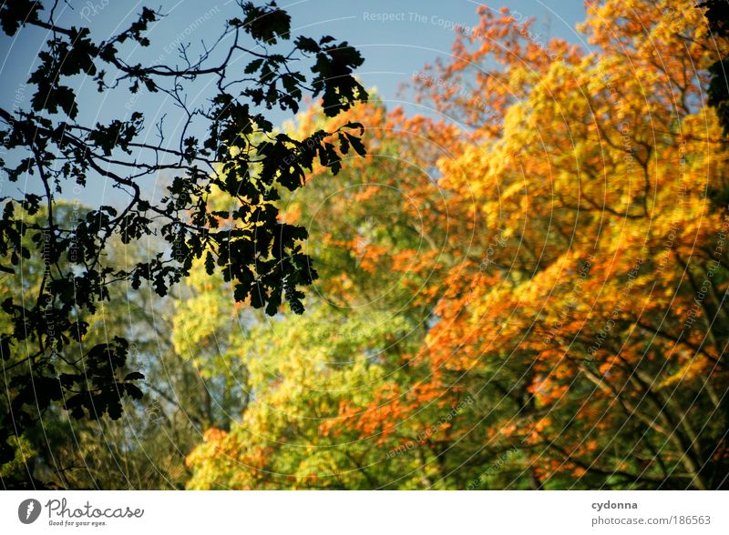 autumn foliage Life Harmonious Well-being Relaxation Calm Environment Nature Autumn Tree Leaf Forest Esthetic Uniqueness Experience Idyll