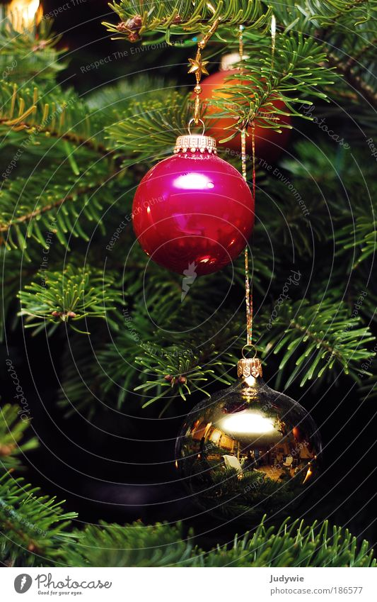 Noel Winter Living or residing Flat (apartment) Feasts & Celebrations Nature Plant Christmas tree Decoration Kitsch Odds and ends Sphere Happiness Glittering