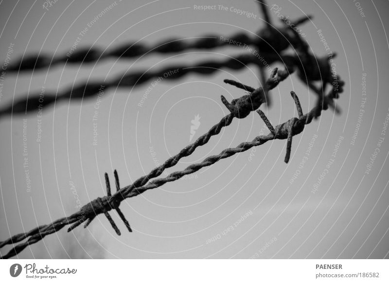 Nature Emotions Death Hope Grief Belief Fence Rust Crown Thorn Barbed wire Barbed wire fence Bravery
