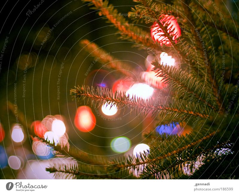 Nature Christmas & Advent Green Tree Fir tree Electric bulb Anticipation Christmas Fair Fairy lights Twigs and branches Fir branch Warm light