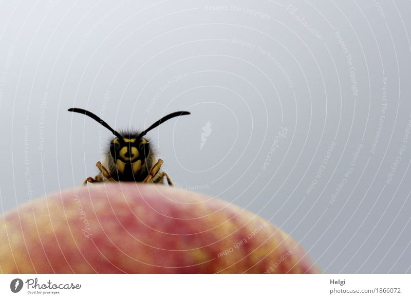 Nature Red Animal Black Environment Yellow Life Small Exceptional Gray Wild animal Stand Uniqueness Curiosity Organic produce Apple