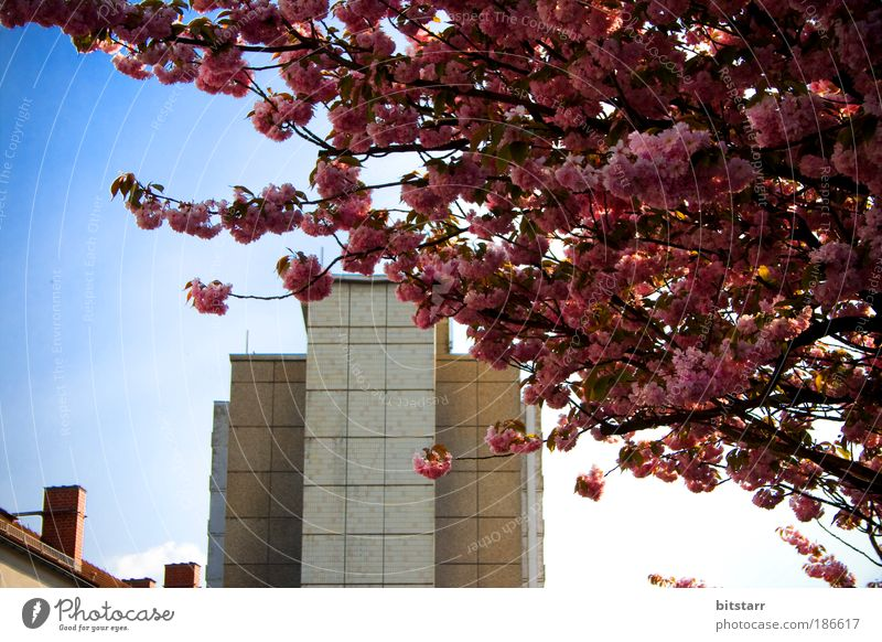 zone spring Nature Plant Sky Spring Beautiful weather Tree Blossom Chemnitz Populated High-rise Manmade structures Building Architecture Prefab construction