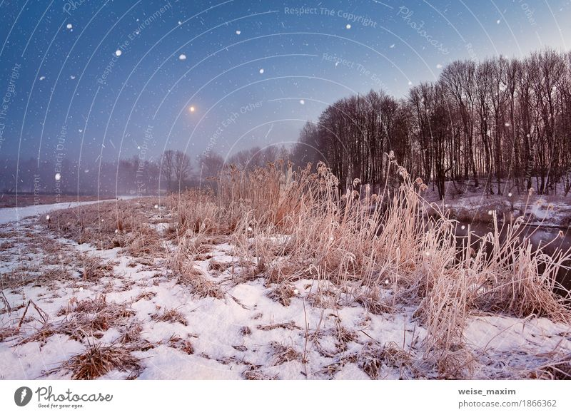 Magic winter Christmas night. Snowfall scene on a river Tree Landscape Winter Meadow Natural Grass Snow Snowfall Fog Ice Adventure River Frost Seasons Frozen Moon