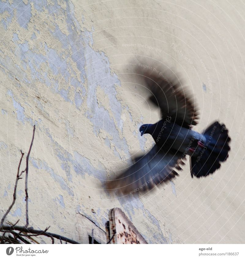 Nature Blue Animal Environment Wall (building) Life Movement Wall (barrier) Gray Freedom Flying Bird Contentment Air Elegant Power