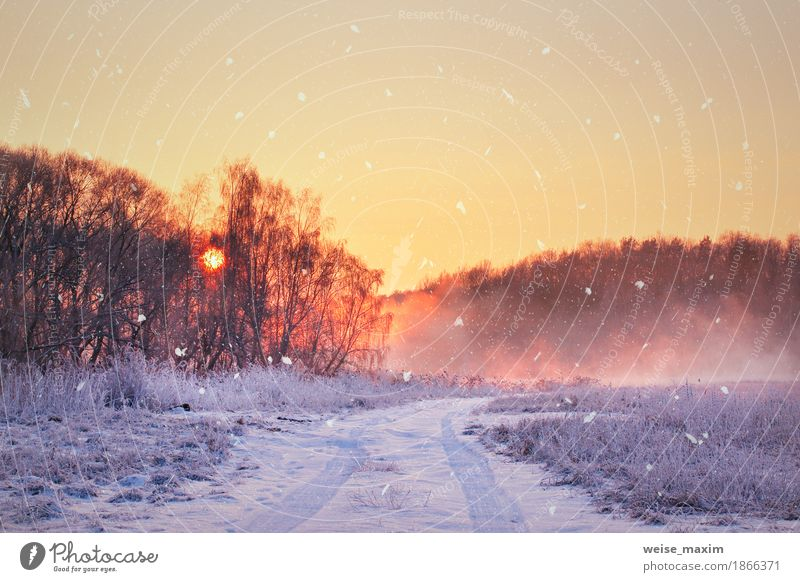 Winter misty sunrise. Rural foggy and frosty scene Sky Nature Vacation & Travel Blue White Tree Landscape Far-off places Winter Forest Yellow Lanes & trails Meadow Natural Grass Snow