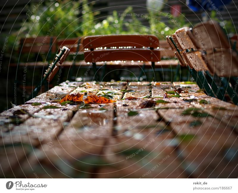 Summer Clouds Sadness Garden Feasts & Celebrations Park Nutrition Empty Wet Bavaria Organic produce Anger Munich Fairs & Carnivals Zoo Seating
