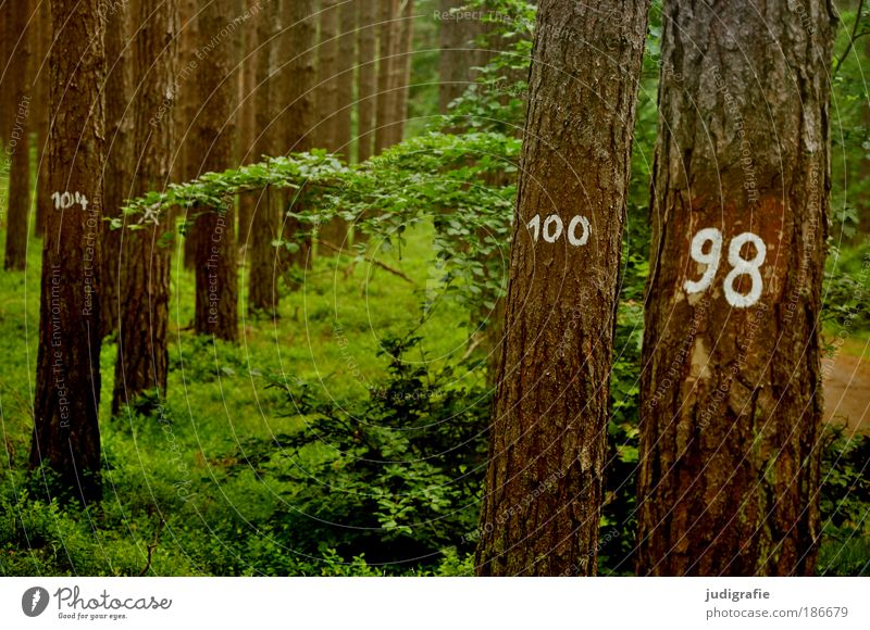 tree counting Environment Nature Landscape Plant Tree Forest Sign Digits and numbers Growth Natural Environmental protection Statistics 100 98 Tree bark Row