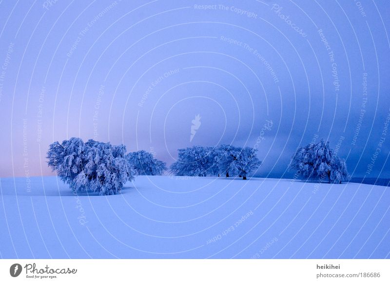 Nature Sky Tree Blue Plant Red Winter Loneliness Cold Snow Relaxation Meadow Emotions Mountain Think Landscape