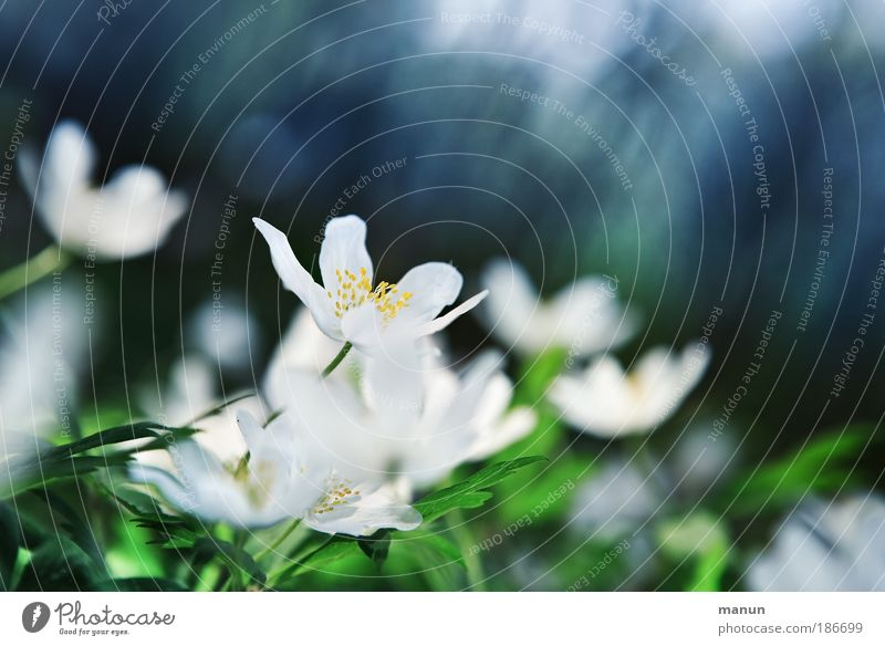 Nature Blue Beautiful Green White Relaxation Flower Leaf Cold Meadow Spring Blossom Feasts & Celebrations Park Fresh Happiness