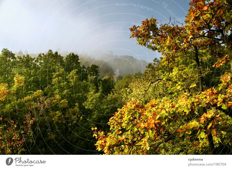 Wartburg Castle in the Fog Well-being Relaxation Calm Vacation & Travel Tourism Far-off places City trip Environment Nature Landscape Cloudless sky Autumn Tree