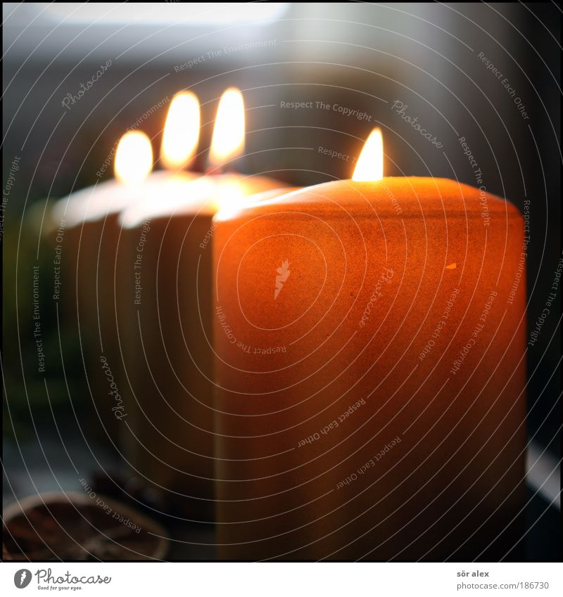 Waiting will soon be over Candle Happy Positive Gold Emotions Moody Anticipation Romance Hope Loneliness Christmas & Advent fourth Advent Light Christmas wreath