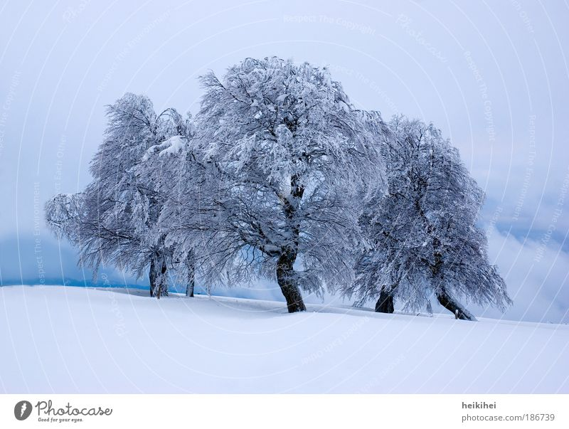 winter's tale Environment Nature Landscape Plant Winter Ice Frost Snow Tree Mountain Gigantic Blue Black White Bizarre Colour photo Exterior shot Deserted