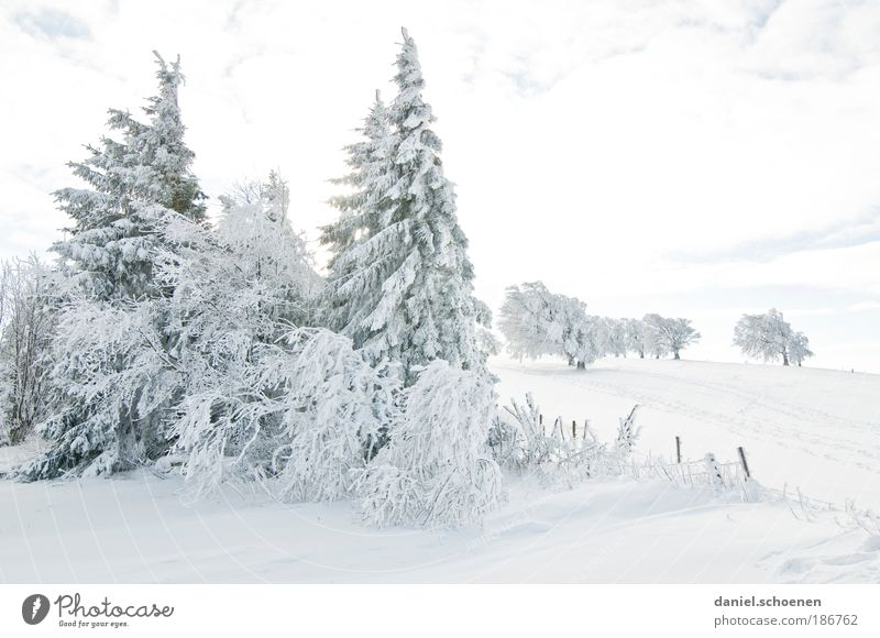 Vacation & Travel White Tree Winter Cold Snow Bright Weather Ice Leisure and hobbies Tourism Trip Climate Beautiful weather Frost Fir tree