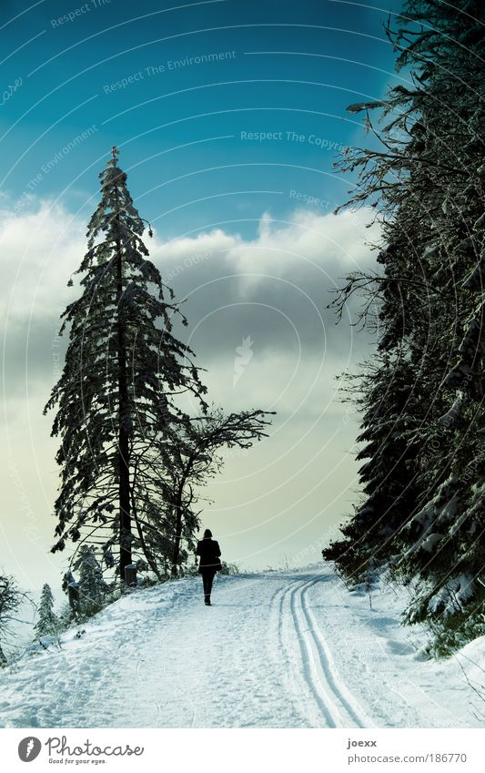 Human being Woman Sky Nature Blue Loneliness Winter Clouds Calm Adults Relaxation Forest Far-off places Mountain Life Snow