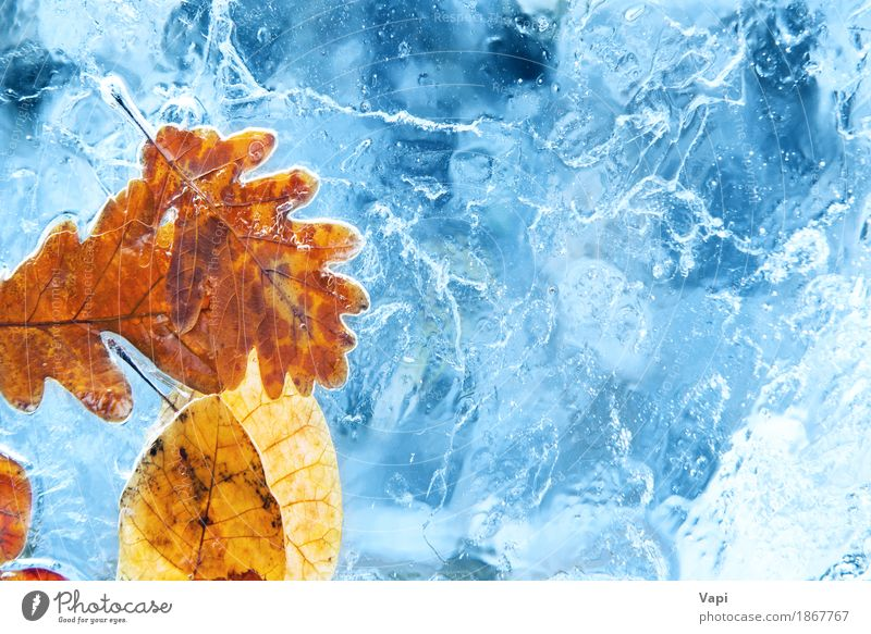 Fallen autumn leaves in the blue ice Winter Snow Environment Nature Plant Water Autumn Climate change Weather Ice Frost Leaf Glacier Freeze Natural Blue Yellow