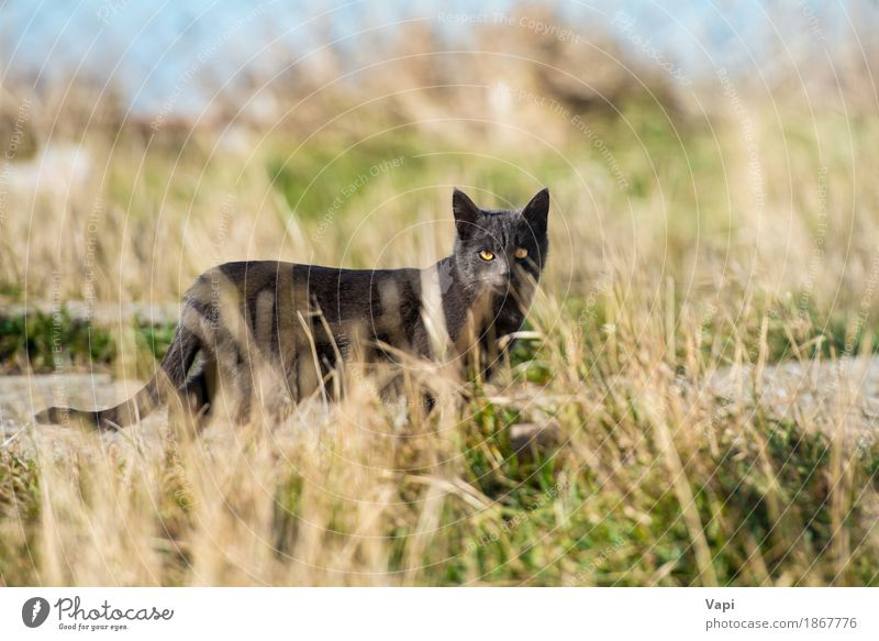Black cat in the grass Nature Landscape Plant Animal Grass Garden Park Meadow Pet Wild animal Cat 1 Together Cuddly Small Cute Soft Blue Yellow Gray Green cats
