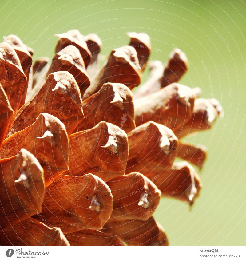 There's a cone. Nature Esthetic Contentment Climate Cone Seed Future Life Offspring USA Decoration Warmth Symbols and metaphors Propagation Biology Brown