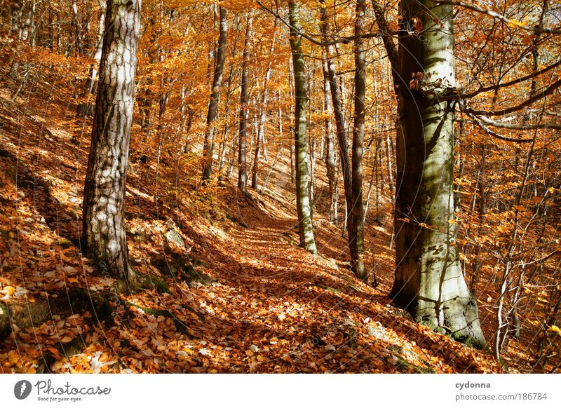 Nature Beautiful Tree Calm Leaf Colour Forest Life Relaxation Autumn Freedom Dream Lanes & trails Landscape Orange Wind