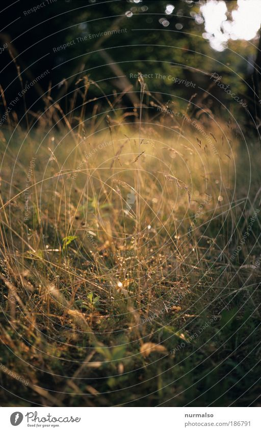 Nature Beautiful Plant Joy Vacation & Travel Relaxation Meadow Environment Grass Park Art Leisure and hobbies Long Hunting Smiling Joie de vivre (Vitality)