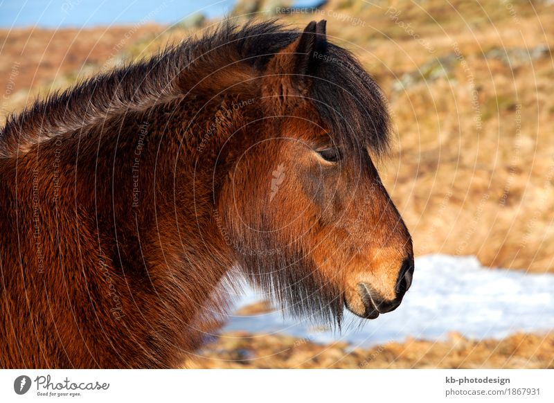 Vacation & Travel Far-off places Winter Tourism Adventure Horse Pet Iceland