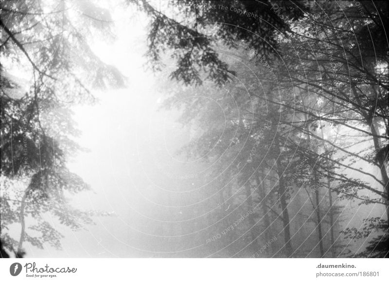 Nature Old Tree Loneliness Forest Life Dark Autumn Emotions Think Landscape Moody Fear Fog Earth Esthetic