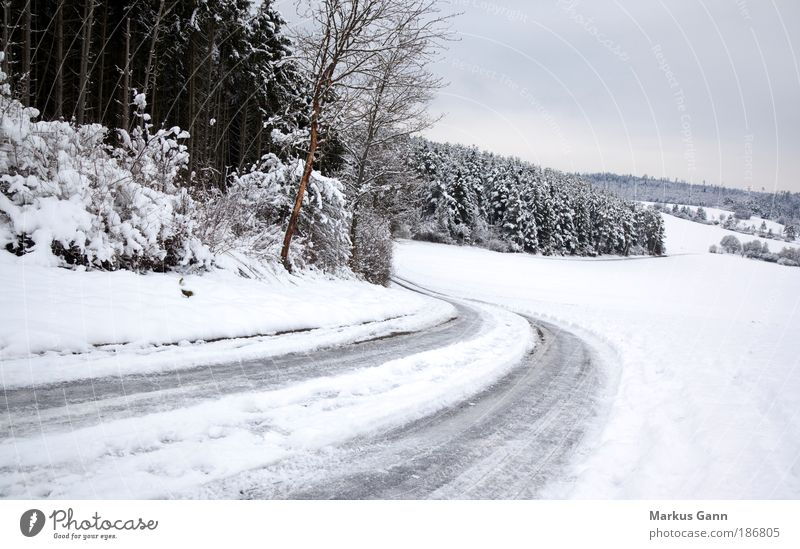 slippery road Winter Nature Landscape Ice Frost Snow Tree Forest Traffic infrastructure Street Threat Gray White Colour photo Exterior shot Deserted