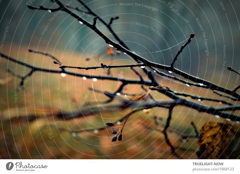 November blues 2 Nature Landscape Plant Drops of water Autumn Climate Bad weather Rain Tree Grass Bushes Park Forest Blue Brown Black Silver Romance To console