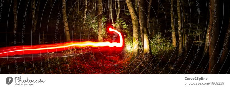 FOREST SPIRITS Tree Forest Illuminate Exceptional Dark Lanes & trails Red Long exposure Magic Enchanting Intellect Phenomenon forest spirit Nature Road marking