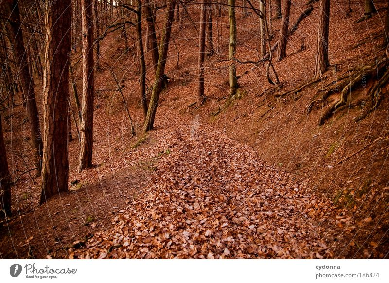Nature Beautiful Tree Red Calm Leaf Colour Forest Life Relaxation Autumn Dream Lanes & trails Landscape Wind Environment