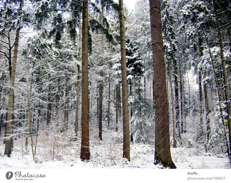 Nature Beautiful White Tree Landscape Calm Winter Forest Cold Environment Snow Ice Frost Seasons Tree trunk Snowscape