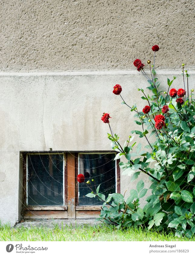 Nature Old Flower Loneliness House (Residential Structure) Meadow Life Window Wall (building) Landscape Gray Grass Garden Stone Wall (barrier) Sadness