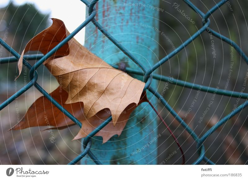 Sky Nature Old Blue Leaf Loneliness Autumn Metal Brown Fear Wait Net To hold on Longing Steel Fence