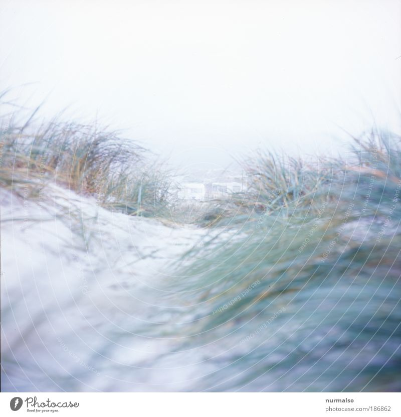 A day at the sea Vacation & Travel Trip Far-off places Freedom Beach Ocean Waves Winter Jogging Art Nature Landscape Plant Fog Ice Frost Seaweed Baltic Sea