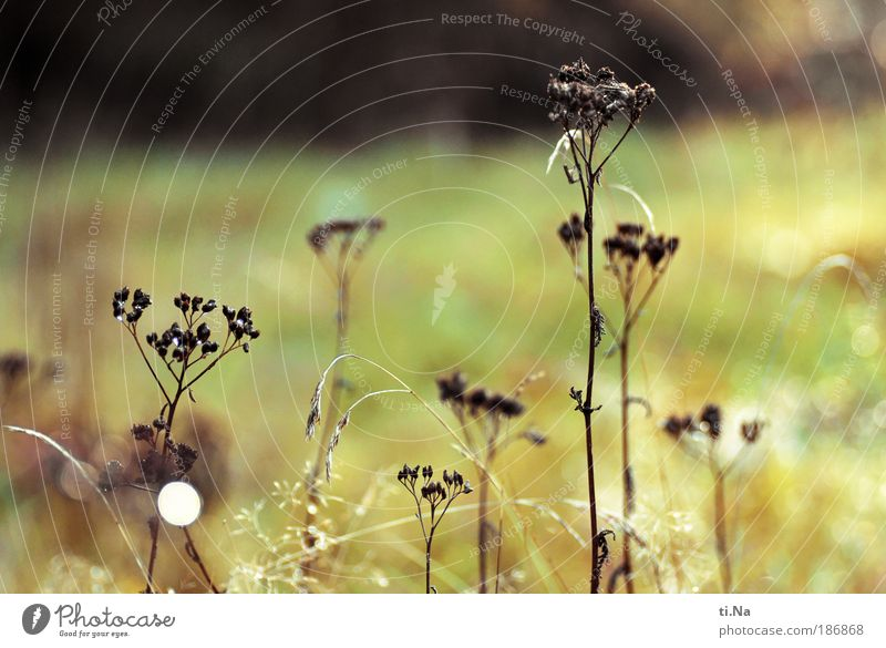 Nature Sun Plant Summer Leaf Autumn Meadow Blossom Grass Landscape Glittering Environment Drops of water Bushes Faded Herbaceous plants
