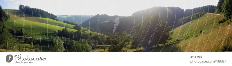 Green Summer Meadow Mountain Large Vantage point Panorama (Format) Valley Baden-Wuerttemberg Black Forest