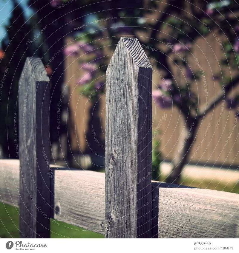 the grass is always greener on the other side Spring Summer Plant Tree Grass Garden Green Competition Nature Divide Fence Fence post Neighbor Neighbor's garden