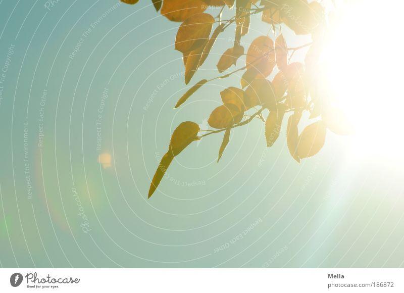 Sky Nature Plant Summer Sun Leaf Environment Life Autumn Natural Moody Bright Illuminate Climate Branch Joie de vivre (Vitality)