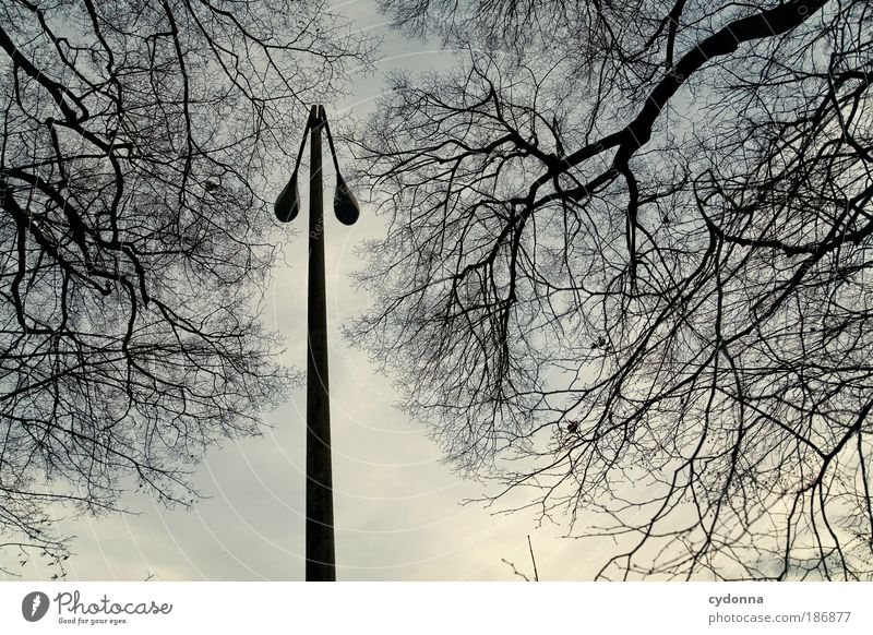 Nature Sky Tree Calm Lamp Life Autumn Death Dream Sadness Environment Time Perspective Esthetic Change Education