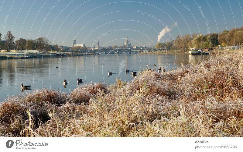 Elbe banks in Dresden Capital city Church Tourist Attraction Landmark Monument Womens chruch Inland navigation Ferry Wild animal Bird Group of animals Serene