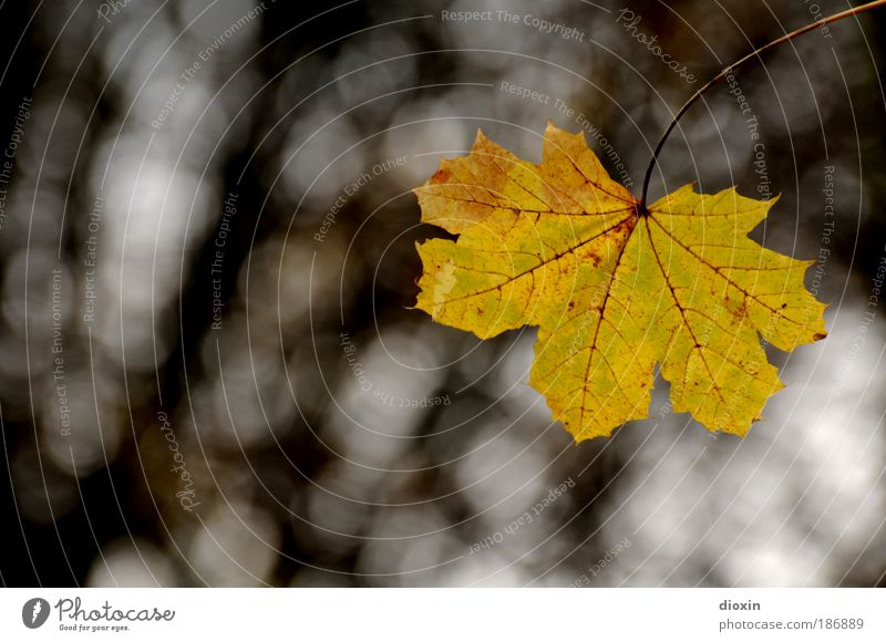Nature Tree Plant Leaf Loneliness Yellow Autumn Brown Environment Transience Hang